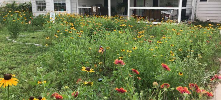 Blog – Okies for Monarchs